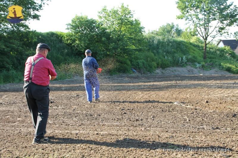 Wysiew ręczny nasion na trawnik